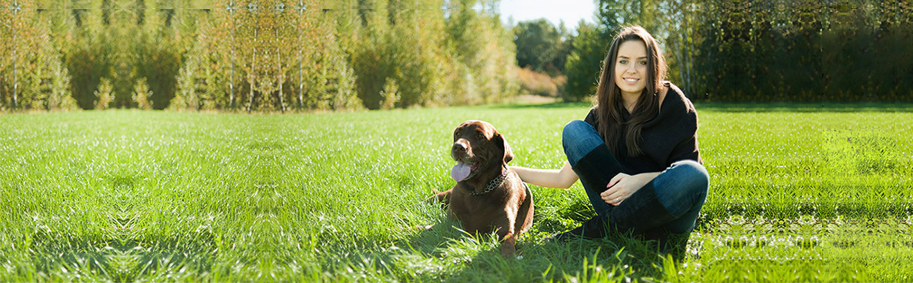 bg_labrador_stretch_400_2_hg